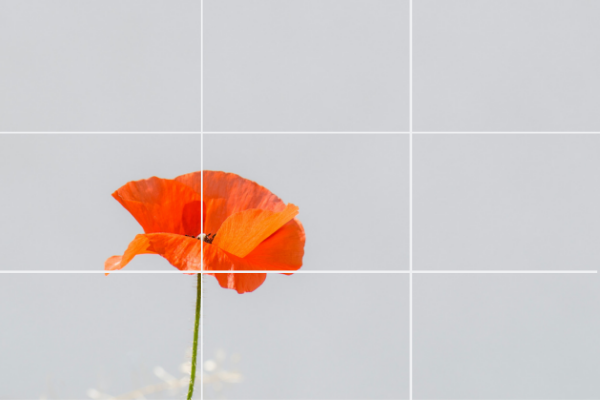 homepage image using rule of thirds